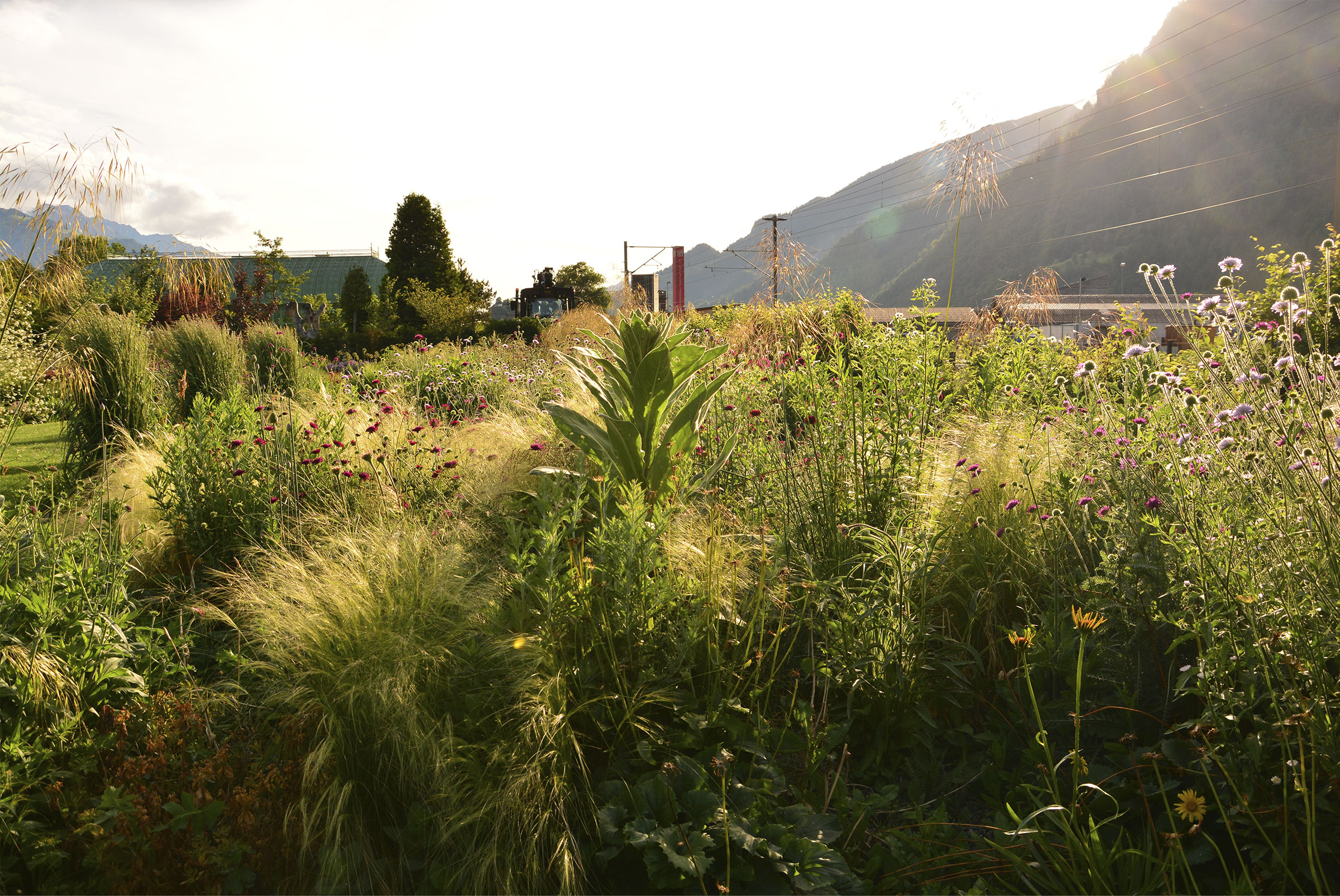 Naturalistischer Garten nach Piet Oudolf – AvantGarten